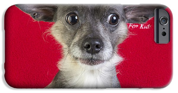 Cute Puppy Photographs iPhone Cases - Christmas Dog iPhone Case by Edward Fielding
