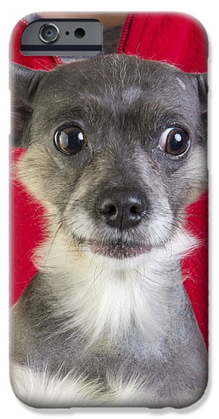 Christmas Dog iPhone Case by Edward Fielding