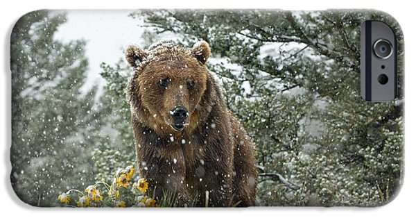 Animals Photographs iPhone Cases - Christmas in June iPhone Case by Wildlife Fine Art