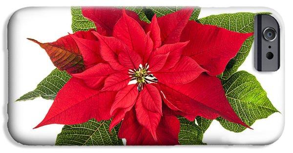 Cutouts Photographs iPhone Cases - Christmas poinsettia  iPhone Case by Elena Elisseeva