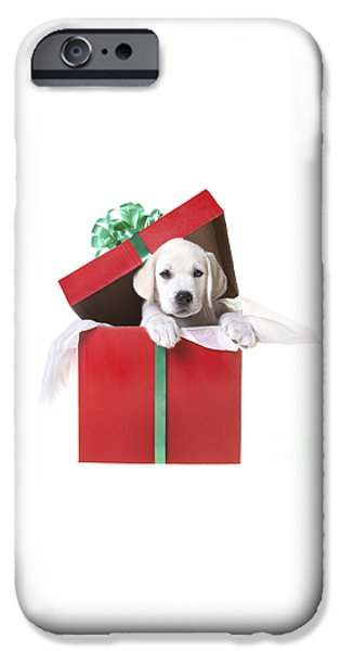 Cute Puppy iPhone Cases - Christmas Puppy iPhone Case by Diane Diederich