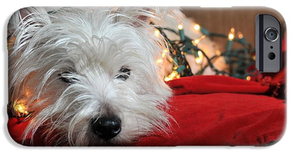 Catherine White Photographs iPhone Cases - Christmas Westie iPhone Case by Catherine Reusch  Daley