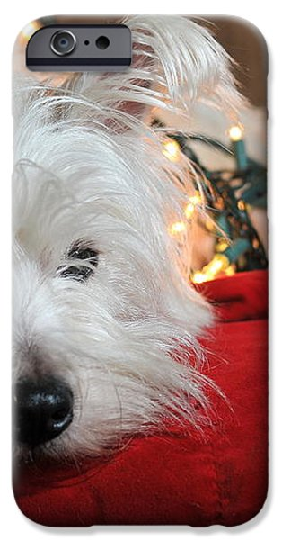 Christmas Westie iPhone Case by Catherine Reusch  Daley