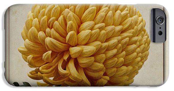 Chrysanthemum iPhone Cases - Chrysanthemum grandiflorum Yellow iPhone Case by John Edwards