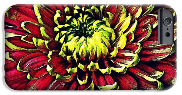 Business Digital iPhone Cases - Chrysanthemum in Red and Yellow iPhone Case by Sarah Loft