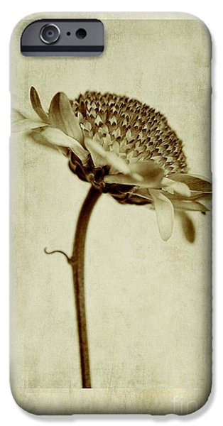 Close Focus Floral iPhone Cases - Chrysanthemum in Sepia iPhone Case by John Edwards
