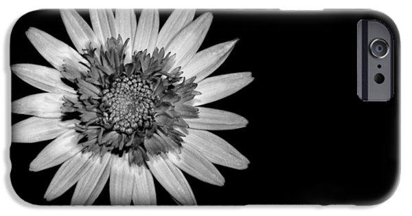 Chrysanthemum iPhone Cases - Chrysanthemum on Black iPhone Case by Mark Rogan