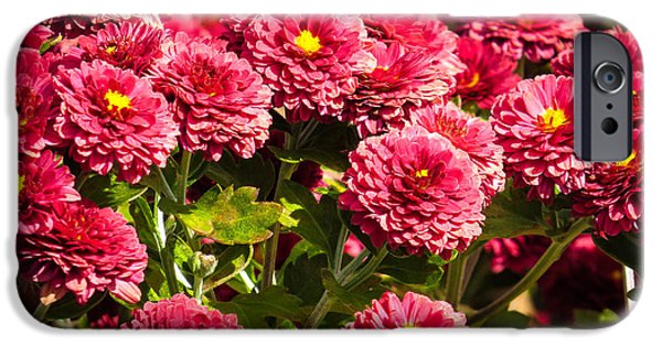 Recently Sold -  - Floral Photographs iPhone Cases - Chrysanthemums iPhone Case by Zina Stromberg
