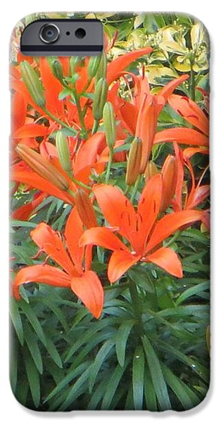 Cincture of lilies iPhone Case by Sonali Gangane
