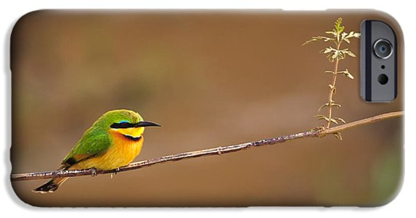 Aviary iPhone Cases - Cinnamon-chested Bee-eater iPhone Case by Adam Romanowicz
