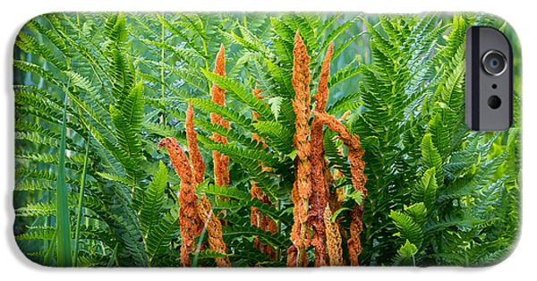 Connecticut Landscape iPhone Cases - Cinnamon Fern iPhone Case by Bill  Wakeley