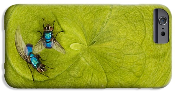 Creative Manipulation iPhone Cases - Circle of flies iPhone Case by Jean Noren