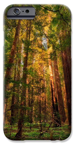 Paint Photograph iPhone Cases - Circle of Light - California Redwoods iPhone Case by Dan Carmichael