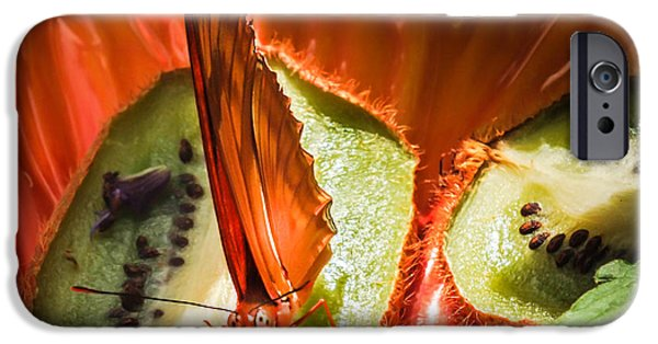 Kiwi iPhone Cases - Citrus Butterfly iPhone Case by Karen Wiles
