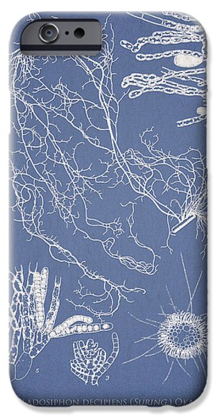 Algae iPhone Cases - Cladosiphon decipiens iPhone Case by Aged Pixel