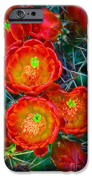 Flora Photographs iPhone Cases - Claret Cup iPhone Case by Inge Johnsson