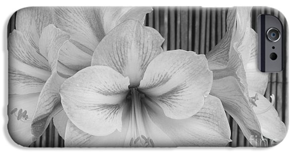 Bamboo Fence iPhone Cases - Classic Lilies iPhone Case by Greg Patzer