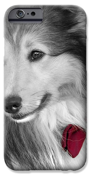Black Dog iPhone Cases - Classy Red iPhone Case by Loriental Photography