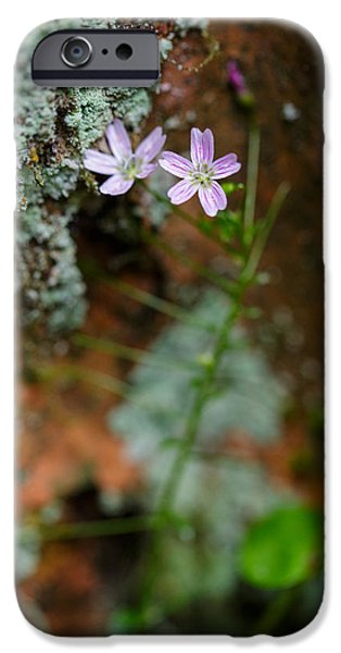 Rust Photographs iPhone Cases - Claytonia and Rust iPhone Case by Rick Berk