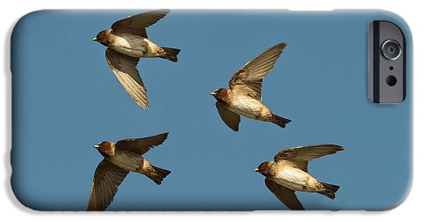 Hirundo iPhone Cases - Cliff Swallows Flying iPhone Case by Anthony Mercieca