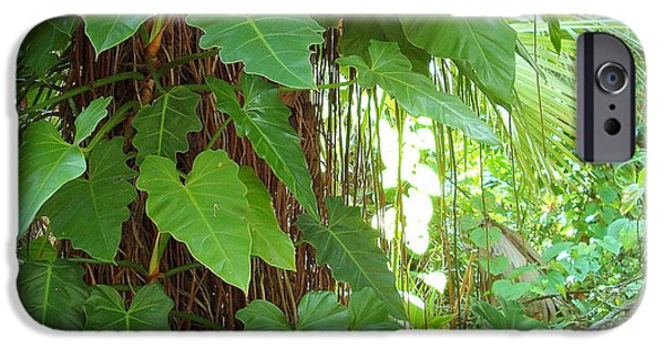 Philodendron iPhone Cases - Climbing Philodendrons iPhone Case by Kay Gilley