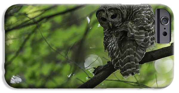 Barred Owl iPhone Cases - Cloaked in Silence iPhone Case by Everet Regal
