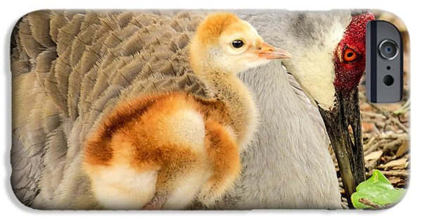 Baby Bird iPhone Cases - Close to mother iPhone Case by Zina Stromberg