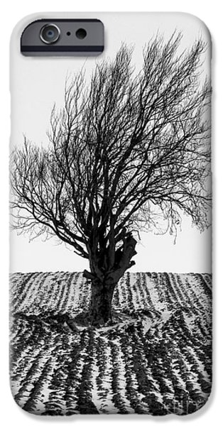 Fresh Snow iPhone Cases - Close tree in snow iPhone Case by John Farnan