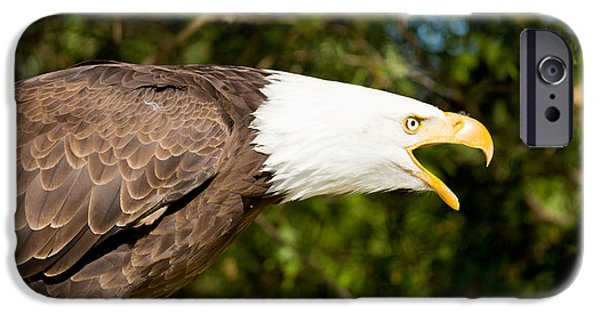 Birds iPhone Cases - Close-up Of A Bald Eagle Haliaeetus iPhone Case by Panoramic Images