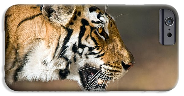 Bengal Tiger iPhone Cases - Close-up Of A Bengal Tiger Panthera iPhone Case by Panoramic Images