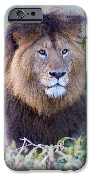 One iPhone Cases - Close-up Of A Black Maned Lion iPhone Case by Panoramic Images