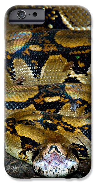 Boa Constrictor iPhone Cases - Close-up Of A Boa Constrictor, Arenal iPhone Case by Panoramic Images