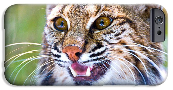 Bobcats iPhone Cases - Close-up Of A Bobcat Lynx Rufus iPhone Case by Panoramic Images
