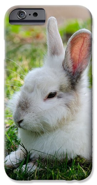 Gray Hair iPhone Cases - Close up of a Bunny iPhone Case by Sotiris Filippou
