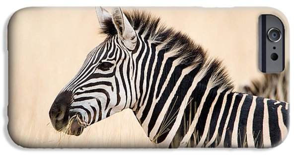 Fauna iPhone Cases - Close-up Of A Burchells Zebra Equus iPhone Case by Panoramic Images