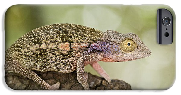 Chameleon iPhone Cases - Close-up Of A Chameleon On A Branch iPhone Case by Panoramic Images