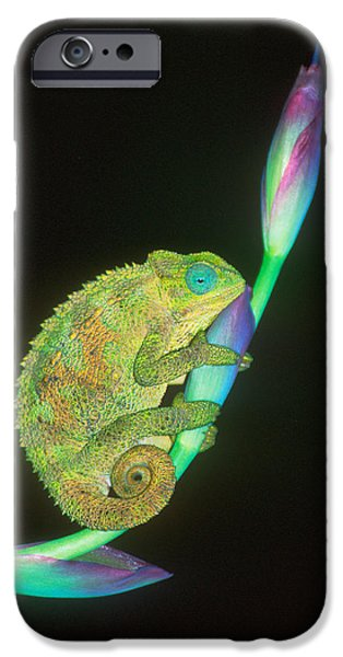 Chameleon iPhone Cases - Close-up Of A Chameleon Sitting iPhone Case by Panoramic Images