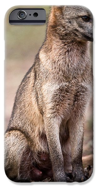 Dog Close-up iPhone Cases - Close-up Of A Crab-eating Fox Cerdocyon iPhone Case by Panoramic Images