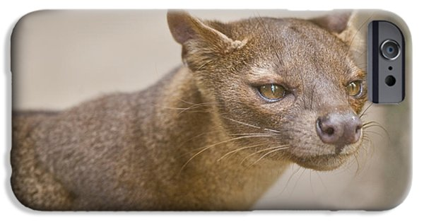 Animal Themes iPhone Cases - Close-up Of A Fossa Cryptoprocta Ferox iPhone Case by Panoramic Images