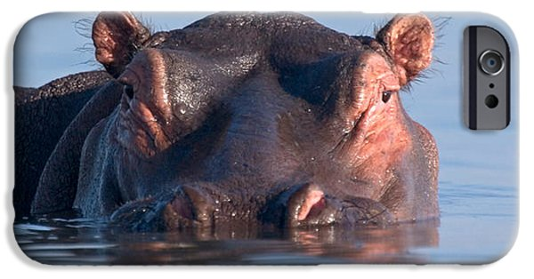 Reflection In Water iPhone Cases - Close-up Of A Hippopotamus Submerged iPhone Case by Panoramic Images