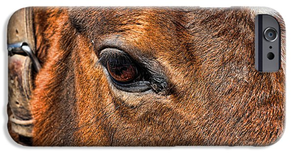 Nature Study iPhone Cases - Close up of a horse eye iPhone Case by Paul Ward