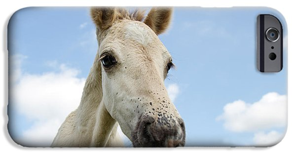 The Horse iPhone Cases - Close up of a Konik horse foal  iPhone Case by Roeselien Raimond