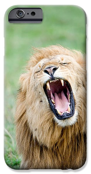 Fauna iPhone Cases - Close-up Of A Lion Panthera Leo iPhone Case by Panoramic Images