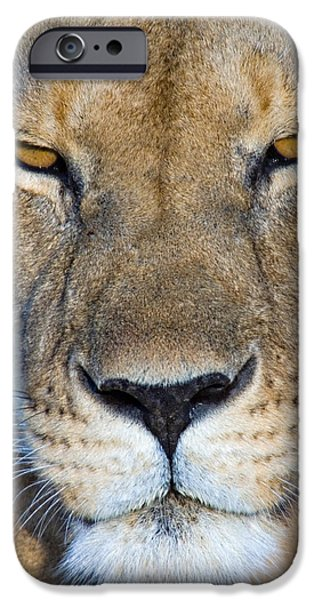 Masai Mara Photographs iPhone Cases - Close-up Of A Lioness, Masai Mara iPhone Case by Panoramic Images