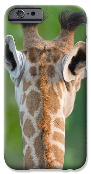 Behind The Scenes Photographs iPhone Cases - Close-up Of A Masai Giraffe, Lake iPhone Case by Panoramic Images