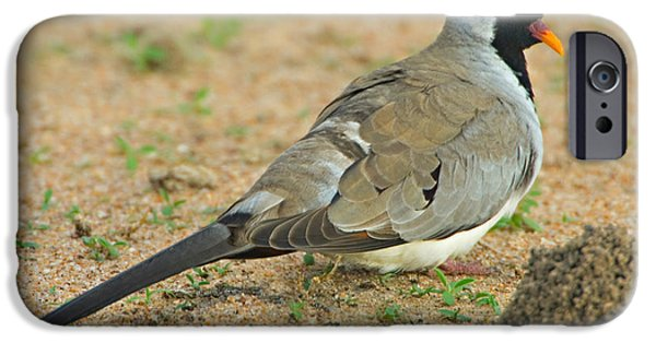 Tarangire iPhone Cases - Close-up Of A Namaqua Dove, Tarangire iPhone Case by Panoramic Images