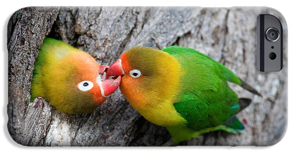 Bonding iPhone Cases - Close-up Of A Pair Of Lovebirds, Ndutu iPhone Case by Panoramic Images
