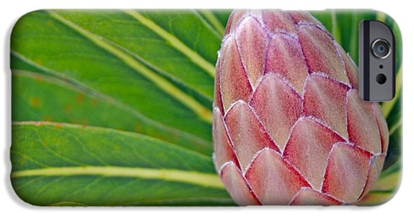 Colorful Photos iPhone Cases - Close up of a Protea in Bud iPhone Case by Anonymous