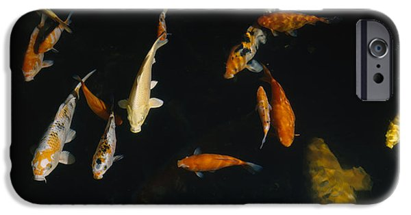 Japanese School iPhone Cases - Close-up Of A School Of Fish In An iPhone Case by Panoramic Images