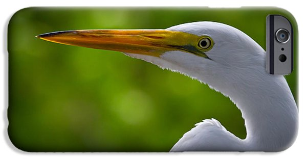 Birds iPhone Cases - Close up of a Snowy Egret iPhone Case by Andres Leon